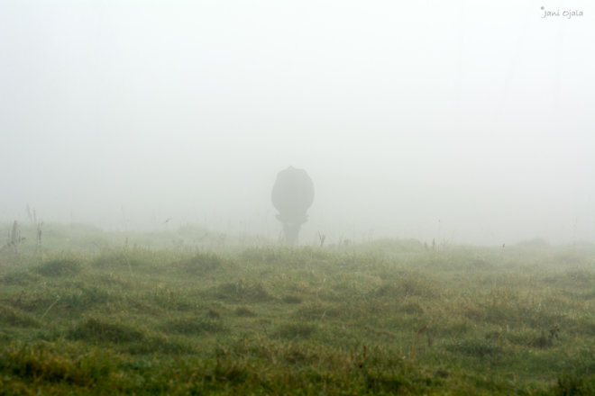 Misty creature in the fog