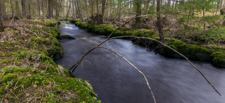 Beautiful spring river