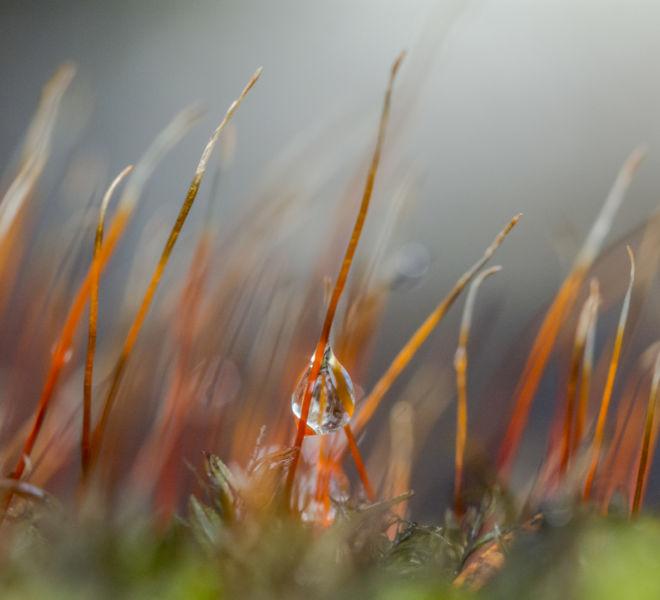 Moss water drop