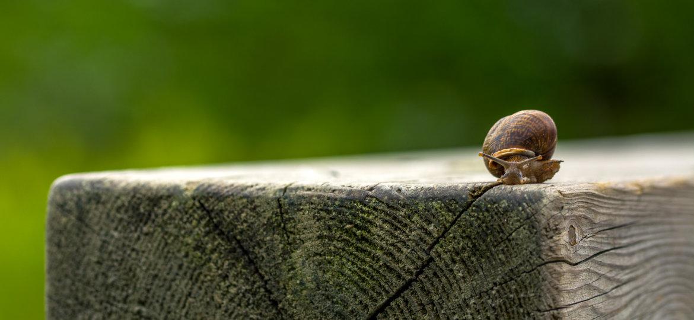 Snail on a wood