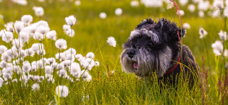Dog in a flowerfield