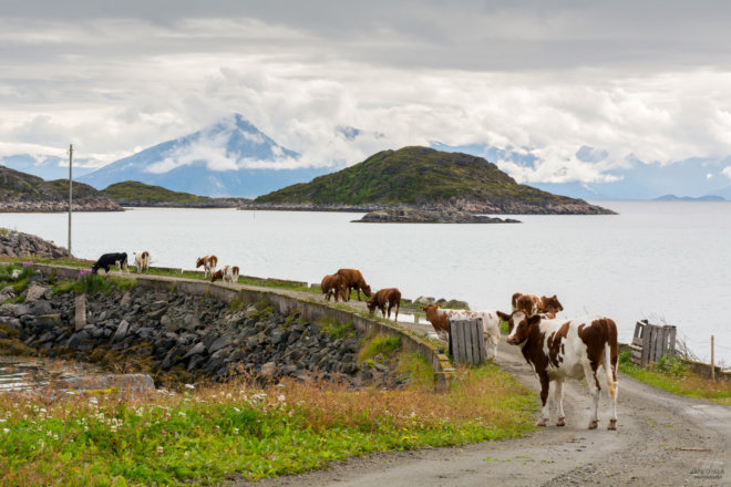 Countryside at Norway beach