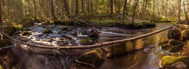 Fallen tree in the river