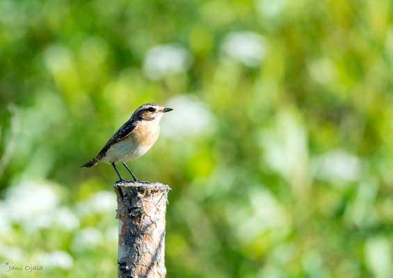Bird on a bole