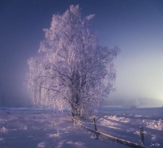 frostybirch
