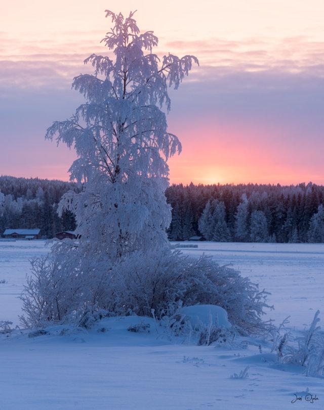 treesunset2