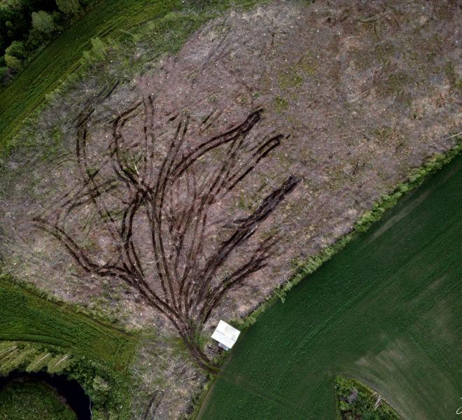 puunjuuret