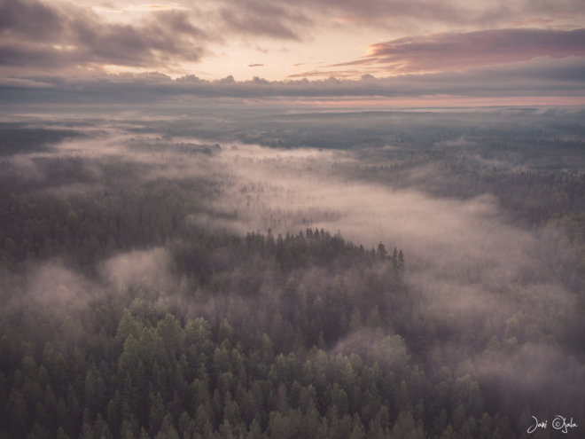 mistyforest