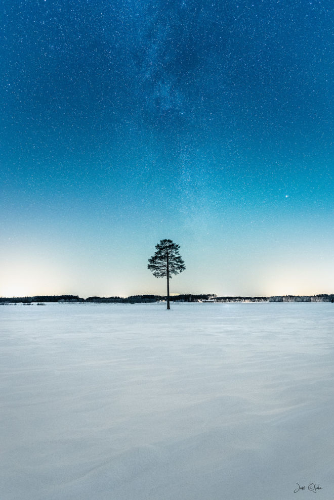 treeonafield