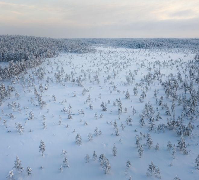 winterswamp