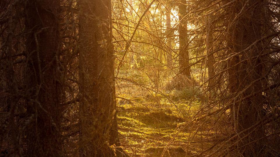 fairytailforest